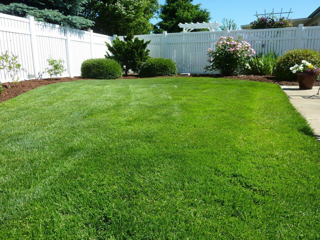דשא מטופל