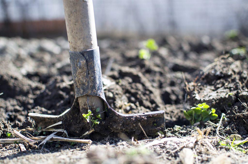 עבודה בגינה