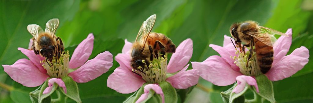 דבורים על פרחים