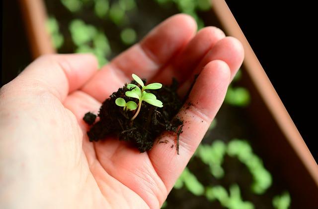 צמח קטנטן ללא עציץ