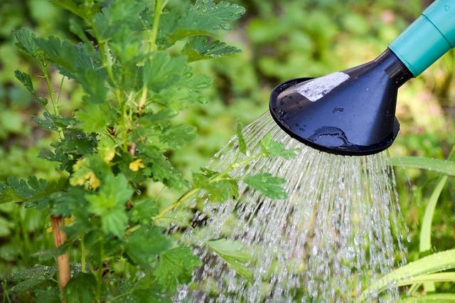 השקיית צמחי הגינה באמצעות מזלף