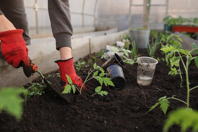 שתילת צמחים בגינת ירק
